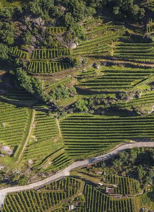 Sagna, colpaccio in Valtellina con la distribuzione dei vini di Mamete Prevostini