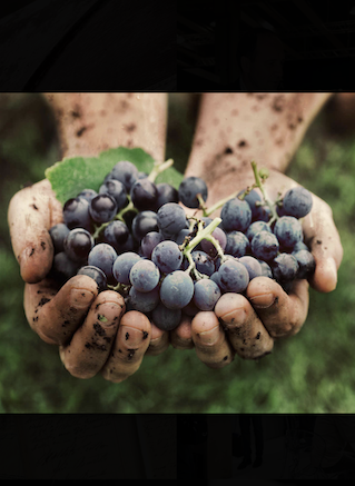 Valpolicella, Amarone e Recioto. I Vini Secondo Marco (Speri)